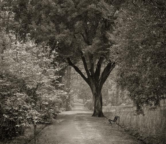 dow-path-florence