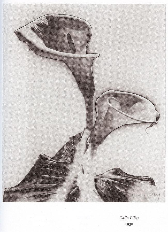 man-calla-lilies-30