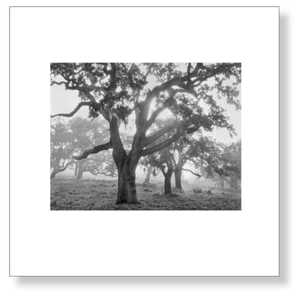 sexton-oaks_fog_lg