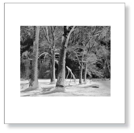 sexton-trees_snow_winter_lg