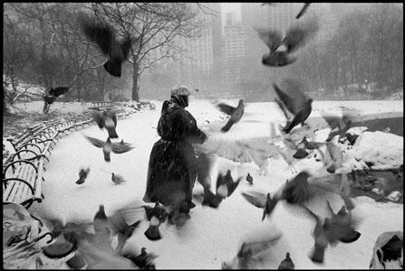 davidson-lola-feeding-birds2