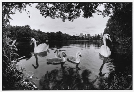 davidson-swan