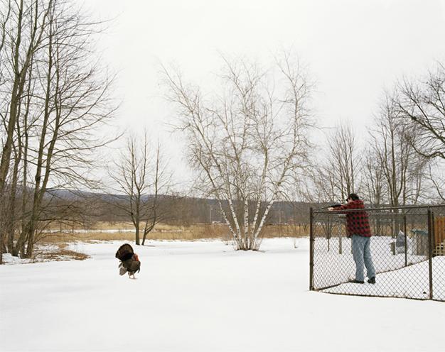 stein-backyard