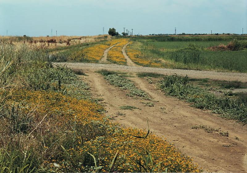 Felzmann_crossroads_landscape_32