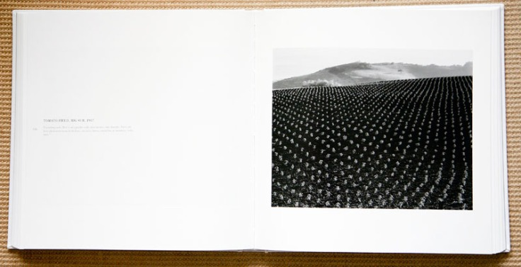 Edward_Weston_Tomato_Field_Big_Sur_1937