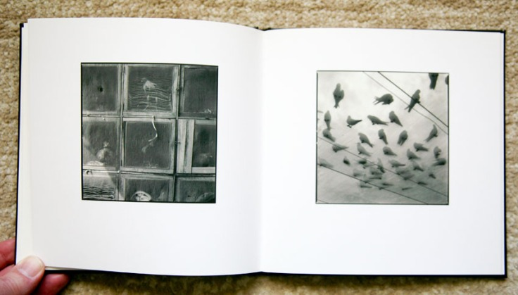 Hiroshi_Watanabe-Veiled_Observations_and_Reflections_4