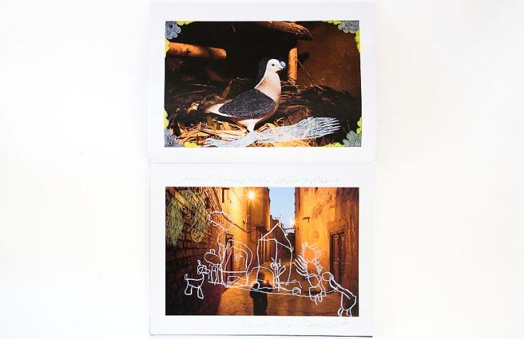 Carolyn_Drake–Wild_Pigeon_3