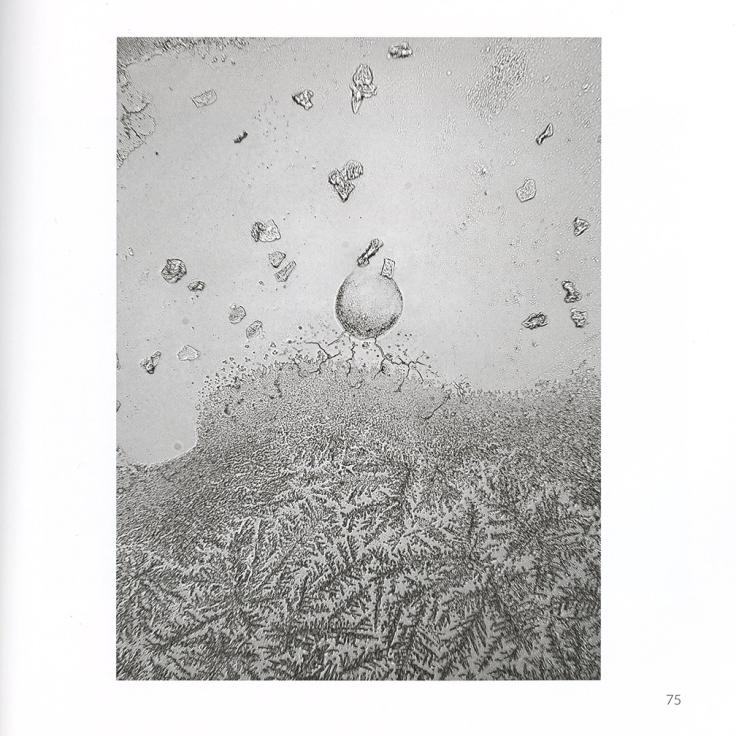 05-Fisher.jpg