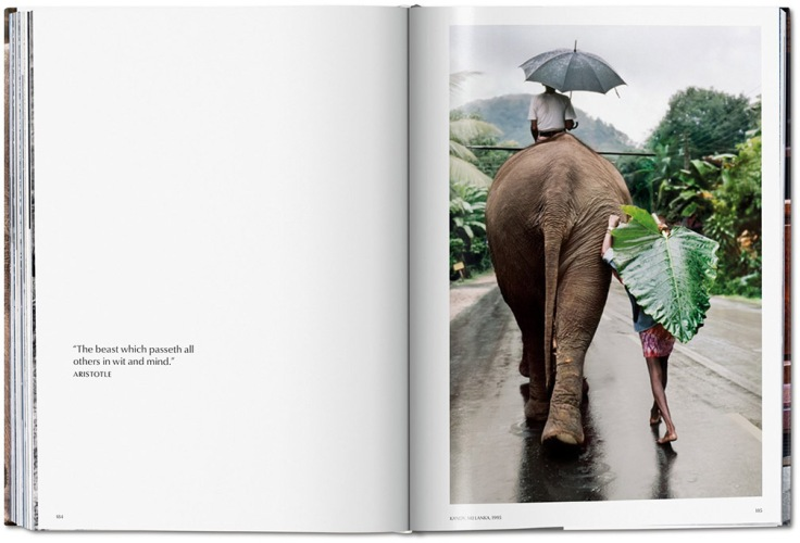 06-animals.jpg