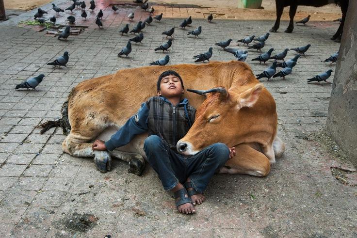 07-animals.jpg