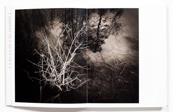 Regina_Anzenberger-Shifting_Roots_1