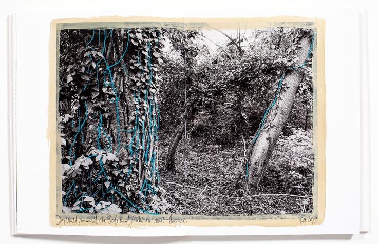 Regina_Anzenberger-Shifting_Roots_2