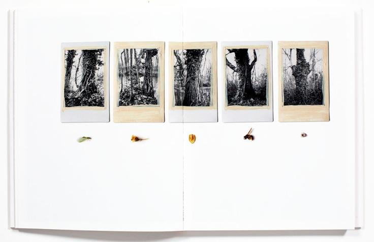 Regina_Anzenberger-Shifting_Roots_3