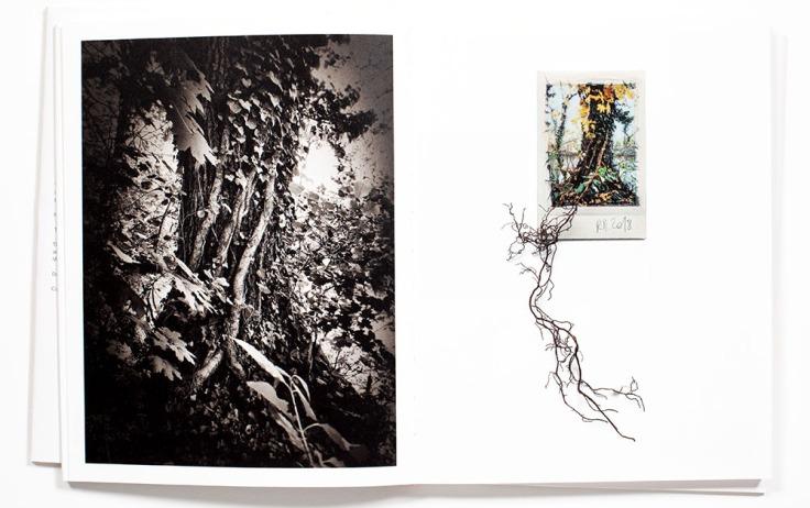 Regina_Anzenberger-Shifting_Roots_4