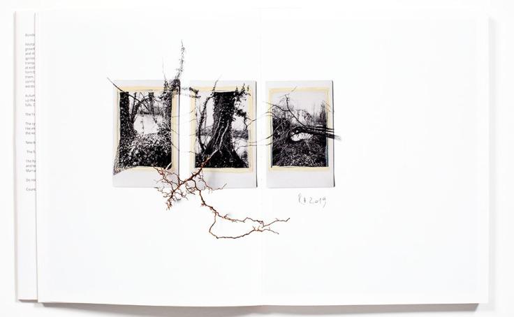 Regina_Anzenberger-Shifting_Roots_8